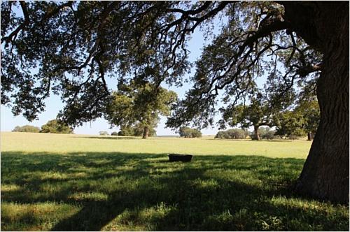 Elfyer - Floresville, TX House - For Sale